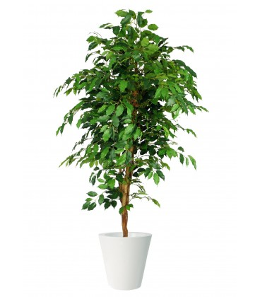 Pianta artificiale per interno Ficus Benjamin 200 h